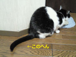 2013_newyear