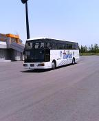 Bus_holly